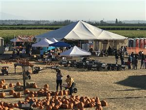 Pumpkin Patch, By-laws