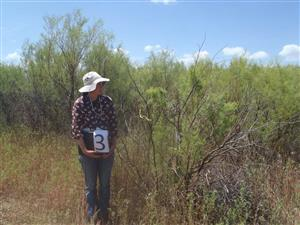 Insectary -- Biological Control in Western Colorado