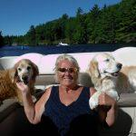 Finding homes for surrendered, abandoned, unwanted or displaced Golden Retrievers