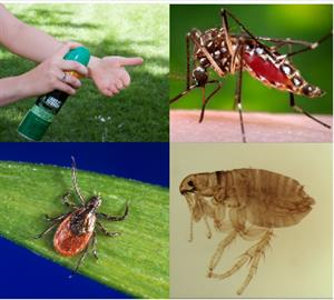 CDC's Division of Vector-Borne Diseases