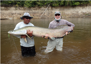 River Monsters of Guyana  -  on a fly rod.