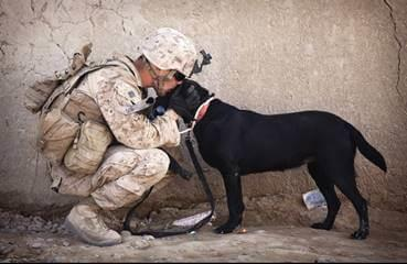 Dogs2Vets